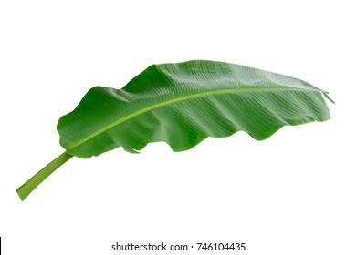 banana leaf isolated on white background.