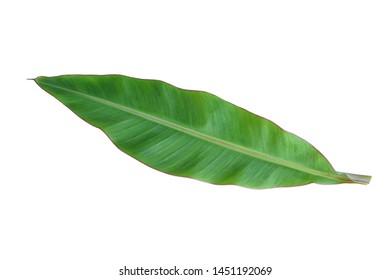 banana leaf on white background.