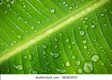 Banana leaf with water droplets
