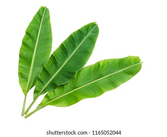 Banana leaves isolated over white background