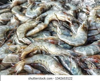 Banana shrimp for sale in Bangkok Fresh Market . Fenneropenaeus merguiensis