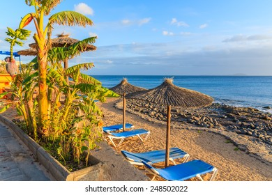 Banana tree and row of sunbeds with umbrellas on Playa Blanca beach at sunset time, Lanzarote, Canary Islands, Spain