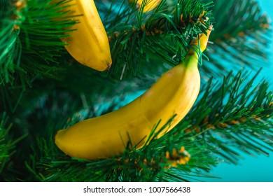 bananas at fur Christmas tree new year summer