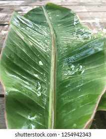 Banane palm leaf, green nature trexture background Green leaf with water droplets in the middle of the leaf.