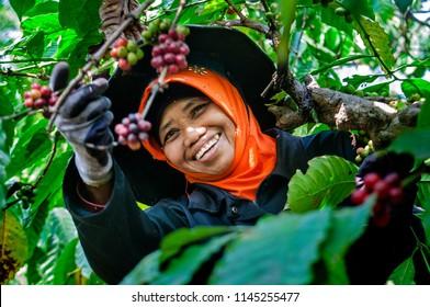 Banaran Coffee Village near the city of Semarang in Central Java, Indonesia,  Juli 29, 2018