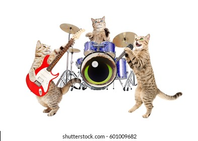 Band musicians cats, isolated on white background