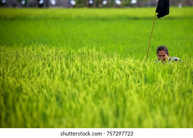 BANDA ACEH, INDONESIA - DECEMBER, 20 2014. Paddy farmers sitting near the rice fields to scare away birds that eat grains in Lhkonga, Banda Aceh