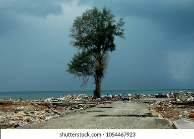 Banda Aceh, Aceh, Indonesia - January 16, 2005:Big Tree in Ulee Lheue after earthquake and tsunami Indian Ocean Destroyed Banda Aceh City in December 26 2004