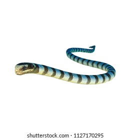 Banded Sea Snake isolated on white background