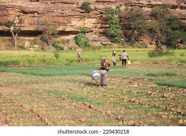 BANDIAGARA, MALI - OCTOBER 2, 2008:  Unidentified group of people work in the field in bandiagara in the Mopti region in Mali on october 2, 2008, Bandiagara, Mali