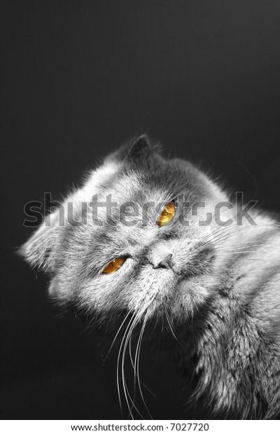 Bandit cat