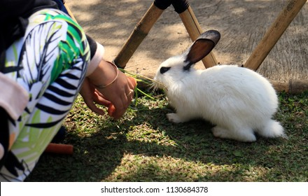 Bandung, Indonesia - July 7, 2018: Children feeding rabbit with carrot in Floating Market Lembang, West Java.