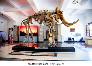 Bandung, West Java / Indonesia - October 21st 2018: The Disosaurus Displays/Exhibits in the Geologi Museum