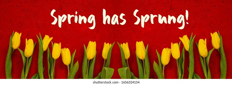 Baner Of Yellow Tulip Flowers, Red Background, Text Spring Has Sprung