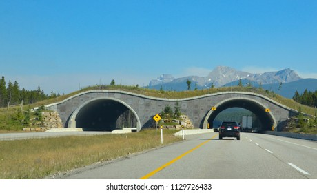 BANFF, AB / CANADA - JULY 27, 2017: Cars approach a highway crossing on Trans-Canada Highway at Banff National Park.