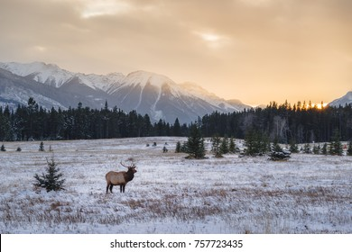 Banff National Park Landscape