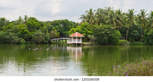 Bang Krachao (Bang Kachao), the Green Lung of Bangkok. The lakeshore with a pavilion, a bridge in a beautiful tropical garden with coconut palm trees' grove.