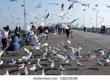 Bang Pu, Samut Prakan, Thailand - Aptil 2019 : Tourists are having fun feeding the annually migrated seagulls at Bang Pu Recreation Center.