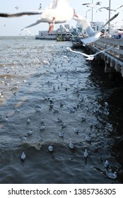 Bang Pu, Samut Prakan, Thailand - April 2019 - A large flock of seagulls flying, looking for food from people during the annual migration from Siberia in Bang Pu, Samut Prakan, Thailand.