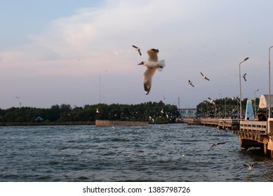 Bang Pu, Samut Prakan, Thailand - April 2019 : A large group of seagulls flying over the sea at sunset in Bang Pu, Samut Prakan, Thailand.