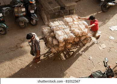 BANGALORE, INDIA - AUGUST 15:  Two unidentified men transport poultry in a market on August 15, 2010 in Bangalore, India. India is largely unaffected by avian flu.