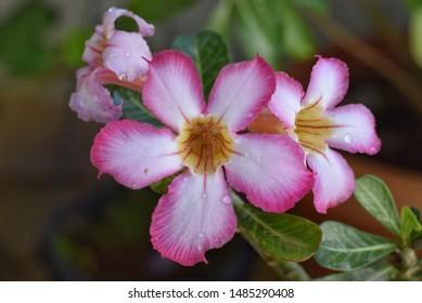 Bangalore Flowers Images, Stock Photos & Vectors | Shutterstock
