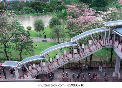 Bangkok - April 2017:  Vachirabenjatas Park (Rot Fai Park), During this time, Pink trumpet tree is blossoming. Many people like to take photos with pink flowers.