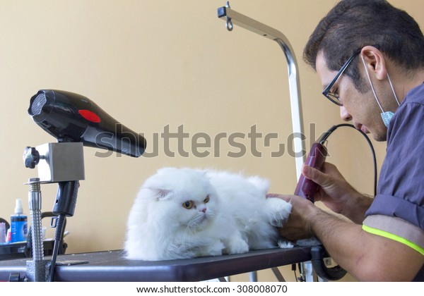 Bangkok - August 20, Cat grooming in pet beauty salon on August 20, 2015 in Bangkok Thailand.