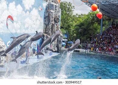BANGKOK - July 27: Instructors perform with Dolphins at show, Safari world on May 27, 2015 in Bangkok, Thailand.