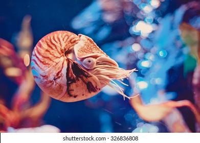 Bangkok Oceanarium. Nautilus