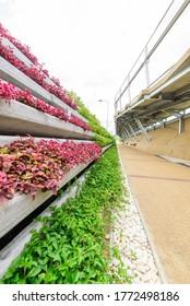 Bangkok , Thailand - 1 July, 2020: Chao Phraya Sky Park new public park in Bangkok, Thailand