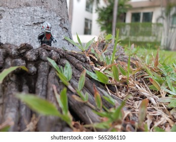 Bangkok, Thailand: 26 Jan 2017 - Lego Antman walking in the garden. This mini figure is from Superhero sets. Lego is a brick brand by Lego group.