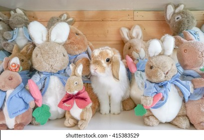 """BANGKOK, THAILAND - APR 23, 2016 : Adorable Holland Lop rabbit disguises among other soft plush doll rabbit characters from Peter Rabbit, famous children stories by Beatrix Potter, """"The Tale of Peter Rabbit""""."""