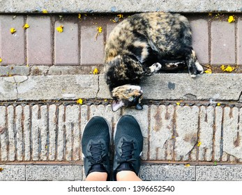 BANGKOK, THAILAND. APRIL 24, 2019: the woman wears running shoes Nike Odyssey React, standing on the concrete floor tiles next to the naughty dirty cat.