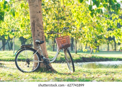 Bangkok, THAILAND - April 25 2017 : Bicycle parked under a tree in a park where people like to relax at sunset.