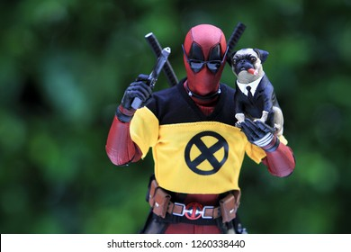 BANGKOK THAILAND - DECEMBER 17 ,2018 : Close up shot of Deadpool superheros figure in action holding Pug Dog ,model figure 1/6 scale