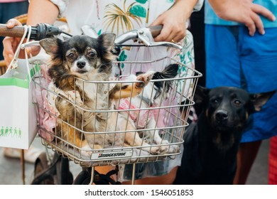 Bangkok, Thailand - December 19, 2015 : Unidentified asian dog owner with a dog feeling happy when owner and  pet (The dog) on shopping cart allowed to entrance for pets expo or exhibit hall