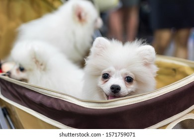 Bangkok, Thailand - July 2, 2016 : Unidentified asian dog owner with a dog feeling happy when owner and  pet (The dog) on shopping cart allowed to entrance for pets expo or exhibit hall