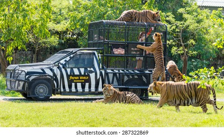 Bangkok, THAILAND - MARCH 31: Feeding of tigers at Safari World zoo in Bangkok, Thailand, on March 31, 2015.