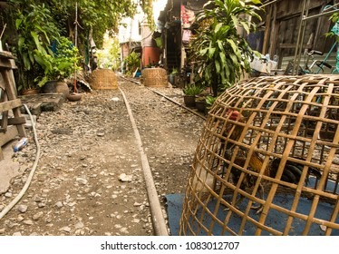Bangkok / Thailand - May 2nd 2018: Klong Toey slum. Traditional  cages with roosters, groomed for cockfighting. In the background, houses along an abandoned railway