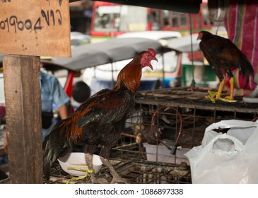 Bangkok/ Thailand - May 7th 2018: Klong Toey market. Cockfighting roosters bound to cages