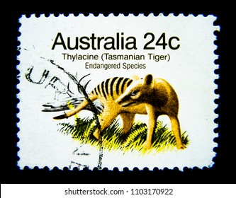 BANGKOK, THAILAND. – On June 1, 2018 - A stamp printed in Australia shows an image of Thylacine Tasmanian tiger on value at 24 cent.