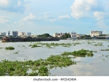 Bangkok, Thailand - SEPTEMBER 17, 2016 : Water Hyacinth (Eichhornia crassipes) quickly spread  in Chao Phraya River on Sep 17, 2016 . It affect to speed of transport and beauty of scenery.