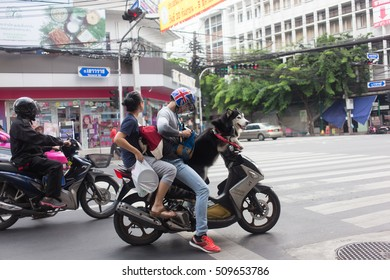BANGKOK, THAILAND - SEPTEMBER 25, Siberian Husky on motorcycle at Yaowarat Road Bangkok Thai China Town. Siberian Husky is one of popular import dog in Thailand