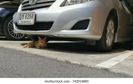 Bangkok,Thailand - October 26 ,2017 :   a cat sleeping under the car at Bangkok,Thailand