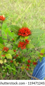 Bangladesh Flowers images Naturally iamges & Good Look Flowers Capture By Me