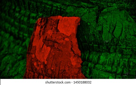 Bangladeshi flags textures painted on a part of tree unique photo