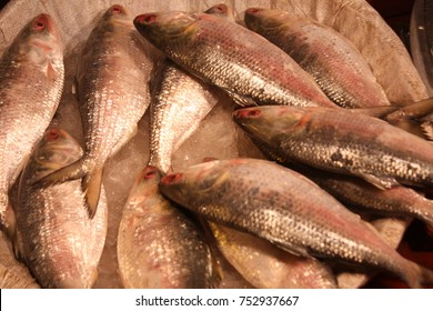 Bangladesh's national fish. A popular food fish in South Asia. Tenualosa ilisha (ilish, hilsa, hilsa herring/ hilsa shad). Many people in fish export import, fishing. In local market shop for sale.