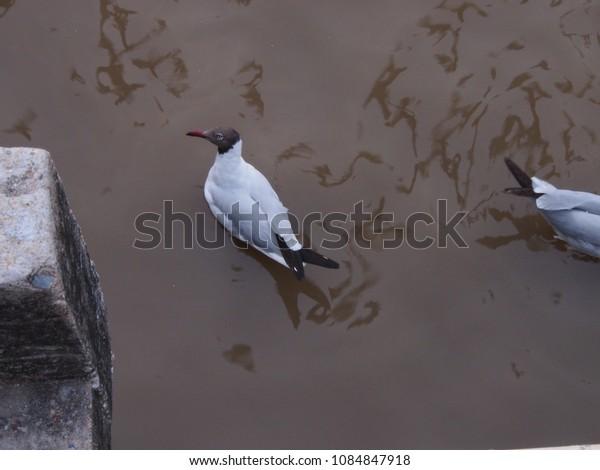Bangpoo Birds at Thailand