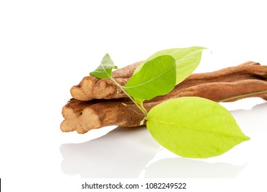 Banisteriopsis caapi wood and leaves isolated on white background.